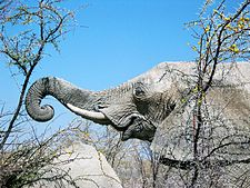 225px-Elephant_grasping_thorn_tree_by_mexikids